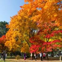 ชวนกันไปฟินกับฤดูใบไม้เปลี่ยนสีที่ฮอกไกโด